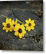 3 Yellow Flowers Metal Print by Aged Pixel