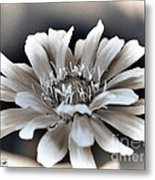 Zinnia From The Whirligig Mix Metal Print