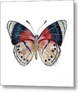 30 Perisama Vaninka Butterfly Metal Print