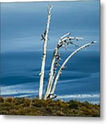 30914-37 A Harsh Climate Metal Print