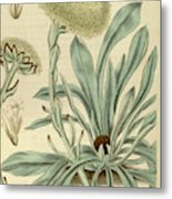 Botanical Print Or English Natural History Illustration Metal Print