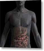 The Digestive System Metal Print