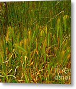 Sunset Bay State Park Metal Print