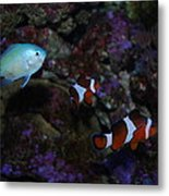 Tropical Fish Metal Print