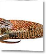 Australian Reptiles On White Metal Print