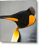 King Penguin Metal Print