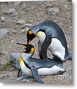 King Penguins Metal Print