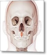 Human Facial Muscles Metal Print