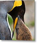 King Penguin Metal Print