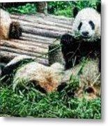 3722-panda -  Embossed Sl Metal Print