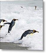 King Penguins Metal Print