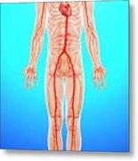 Human Arteries Metal Print