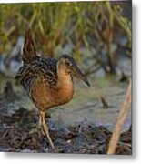 King Rail In A Wetland Metal Print