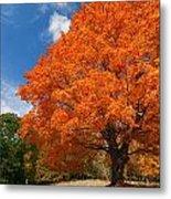 A Blanket Of Fall Colors Metal Print
