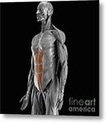 Abdominal Muscles Metal Print