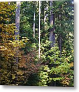 Autumn 8 Metal Print