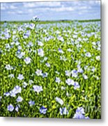 Blooming Flax Field Metal Print
