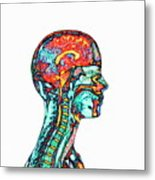 Brain And Spinal Cord Metal Print