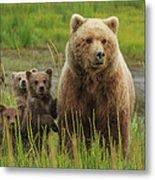 Brown Bear Sow And Cubs, Lake Clark Metal Print