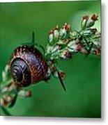 Copse Snail Metal Print