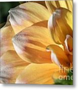 Dahlia Named Seattle Metal Print