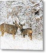 Doe Mule Deer In Snow Metal Print