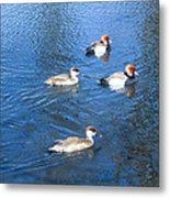 4 Duck Pond Metal Print
