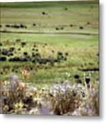 Environmental Tierra Del Fuego -- Metal Print