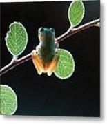 Exotic Frogs Metal Print