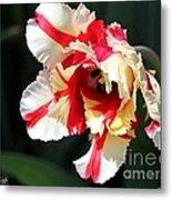 Flaming Parrot Tulip Metal Print