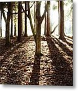 Forest Sunlight Metal Print