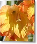 Gladiolus Named Halloween Metal Print