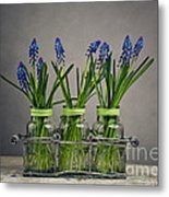 Hyacinth Still Life Metal Print