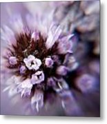 Spring Is Bursting Out All Over. Metal Print