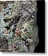 Leaf-tailed Gecko Metal Print