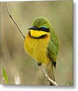 Little Bee-eater Metal Print