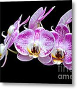 Moon's Orchid  Metal Print