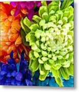 Multicolored Chrysanthemums  Metal Print