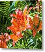Orange Lilium Metal Print