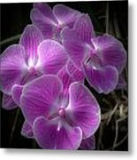 Orchid Dream Metal Print