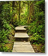 Path In Temperate Rainforest Metal Print