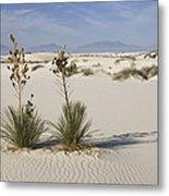 Soaptree Yucca In Gypsum Sand White Metal Print