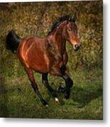 The Bay Horse Metal Print