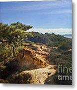 Torrey Pines State Park - California Metal Print