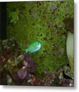 Tropical Fish And Coral Metal Print