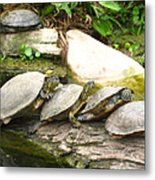 4 Turtles On A Log Metal Print