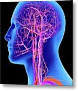 Vascular System Of The Head Metal Print