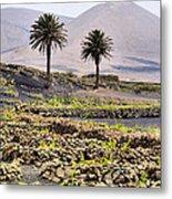 Vineyard On Lanzarote Metal Print