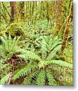 Virgin Rainforest Wilderness Of Fiordland Np Nz Metal Print