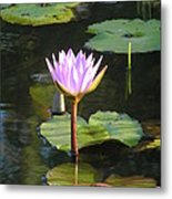 Pond Of Water Lily Metal Print
